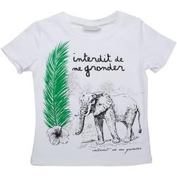 Vêtements Enfant T-shirts manches courtes Interdit De Me Gronder Safari Blanc